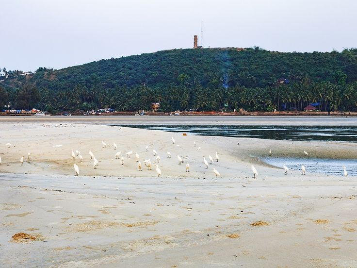 Лучшие пляжи Южного Гоа 72