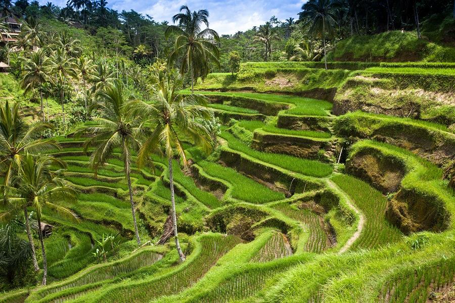деревни Бали