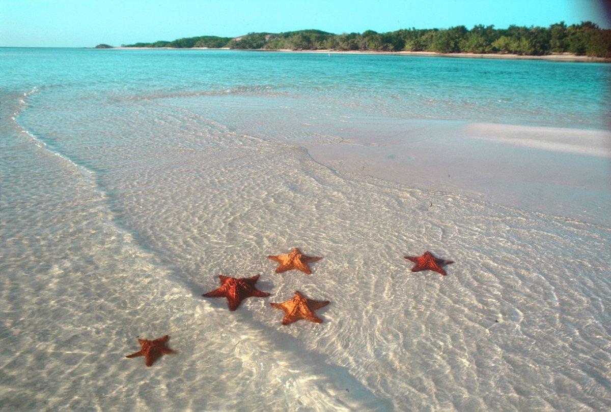 настоящий пляж с настоящими морскими звездами. Красивый пляж Вьетнама.